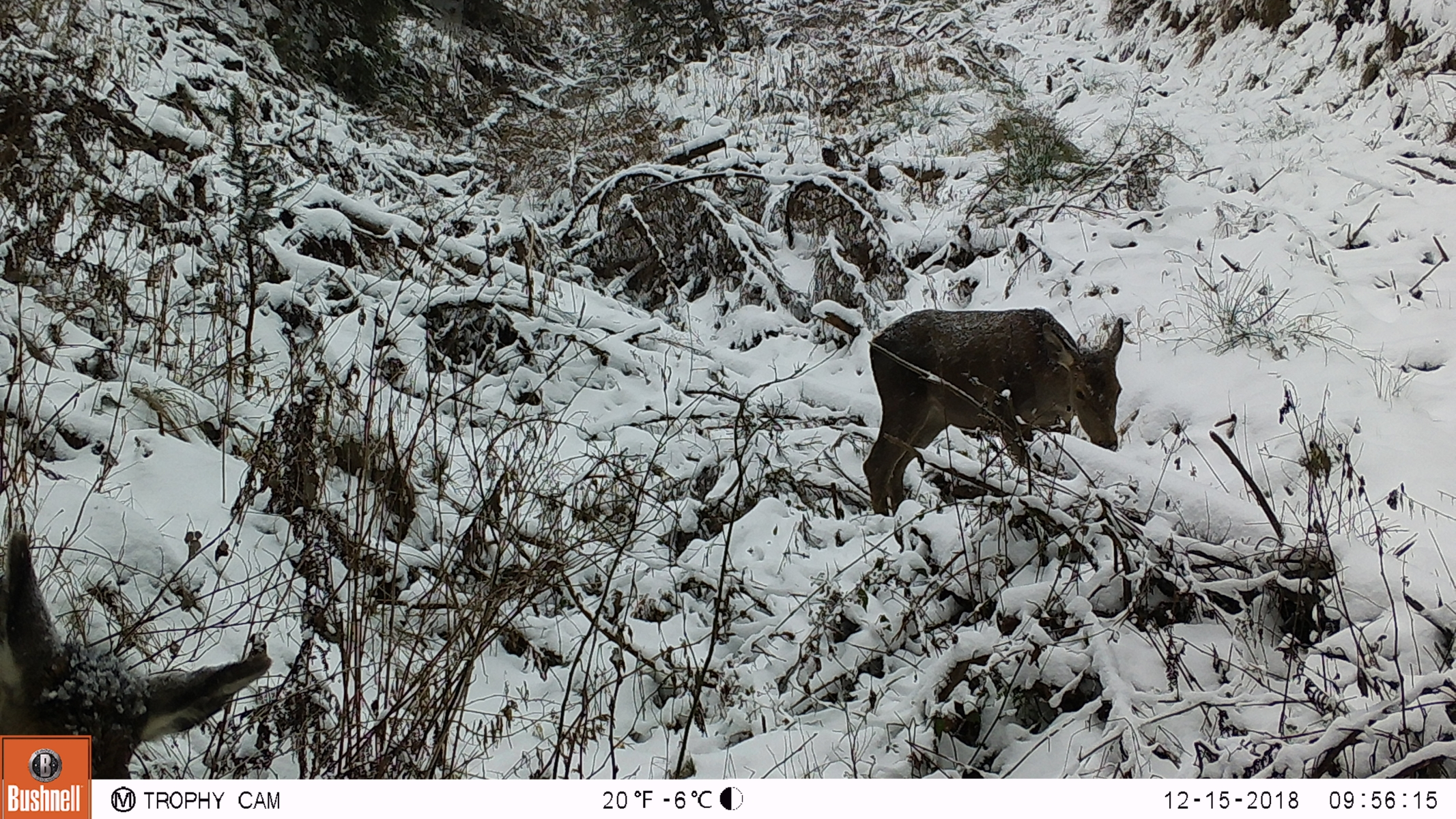 Imagini capturate cu camerele montate în ROSCI0263 Valea Ierii
